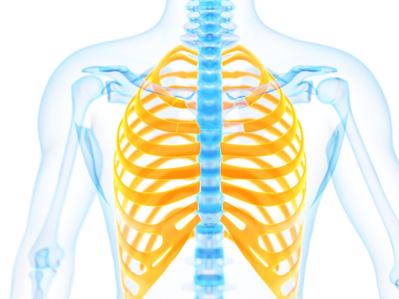 graphic depicting the chest bones