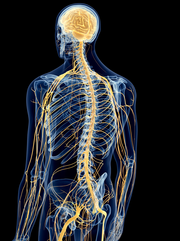 graphics depicting the human skeleton and nervous system