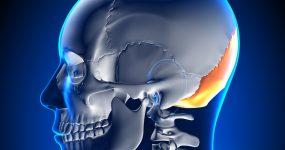 xray of the skull
