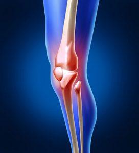 3d model of the knee bones