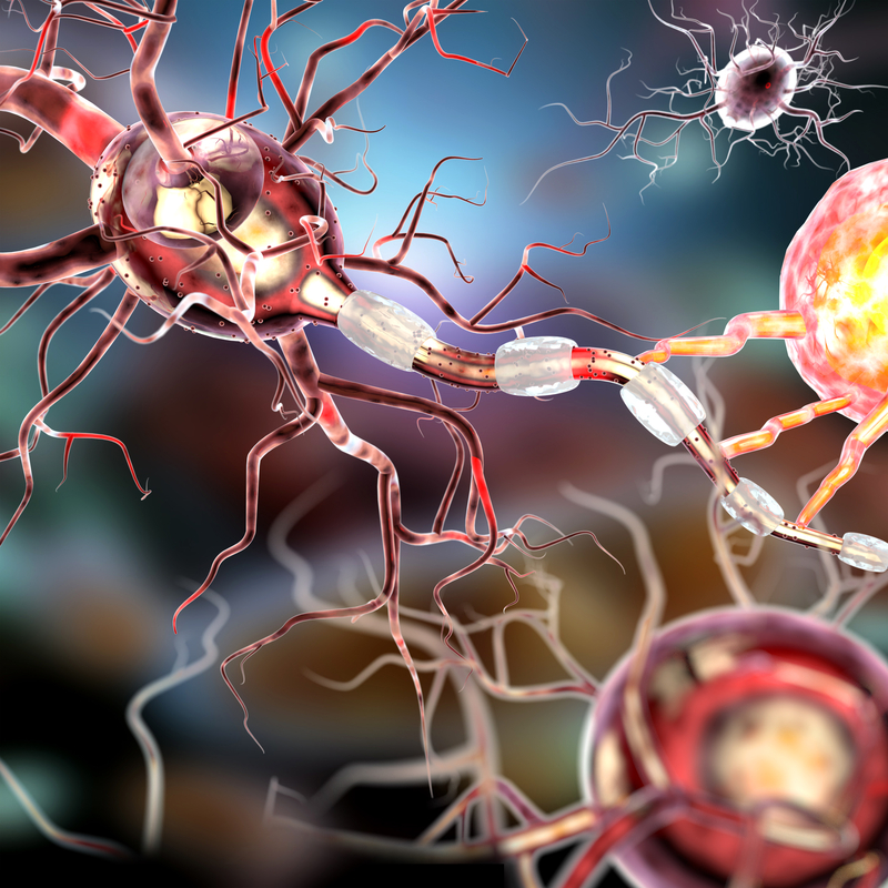 brain Nerve cells model