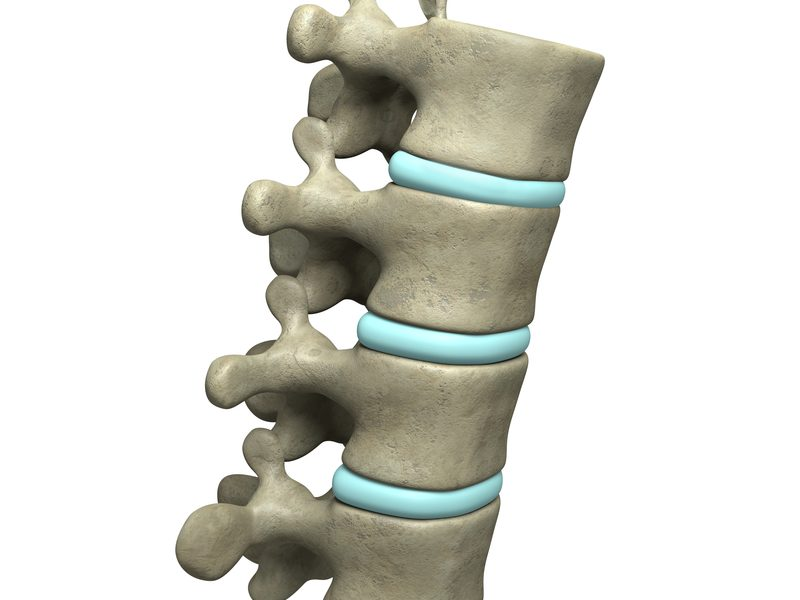 photo showing the spine model